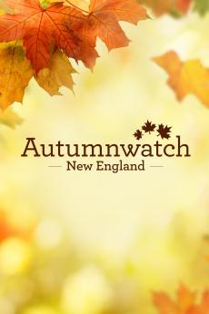 Autumnwatch New England: show-poster2x3