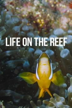 Life on the Reef: show-poster2x3