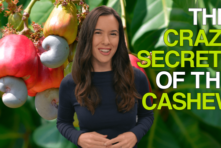The Crazy Secrets of the Cashew: asset-mezzanine-16x9