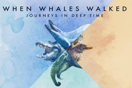 When Whales Walked: Journeys in Deep Time: asset-mezzanine-16x9